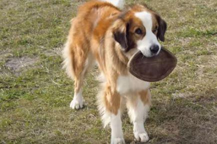 Dog's Purpose Trailer